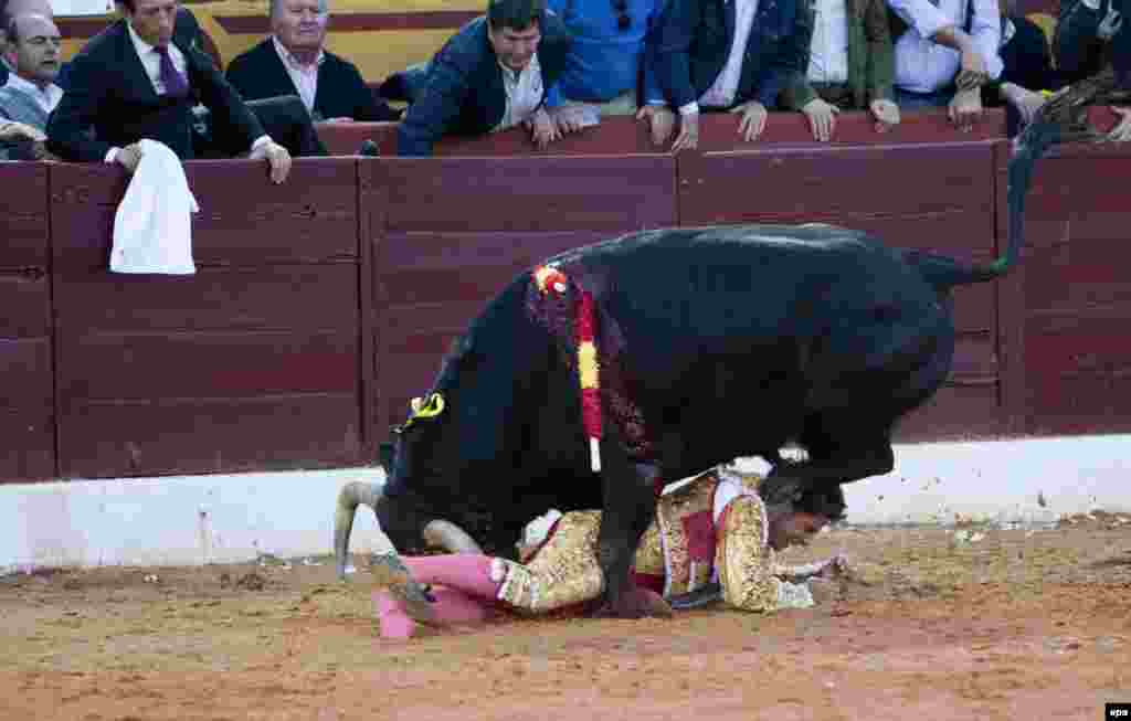 A bull gets the better of Spanish torero Francisco Rivera Ordonez during the Olivenza Fair's second and last bullfight in Olivenza, Badajoz, Spain, on March 8. (epa)