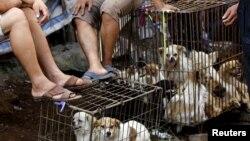 Собачий рынок в Китае.