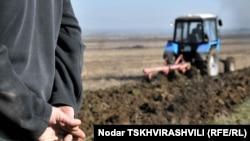 Грузинское правительство приняло программу по распространению гибридных сортов кукурузы в рамках общей стратегии развития сельского хозяйства в помощь фермерам