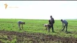 Молитвы земледельцев