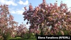 Цветы и люди Межигорья