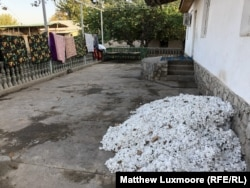 Cotton harvested in the fields awaits sorting at the home of Abdukholik Gadoev's son.