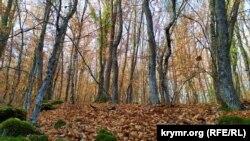 Лес под Севастополем