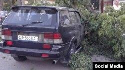 Daraxt yengil avtomobil ustiga qulagan