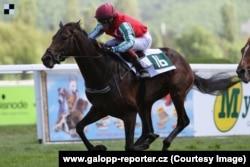 Кадыровская лошадь на одном из забегов в Чехии