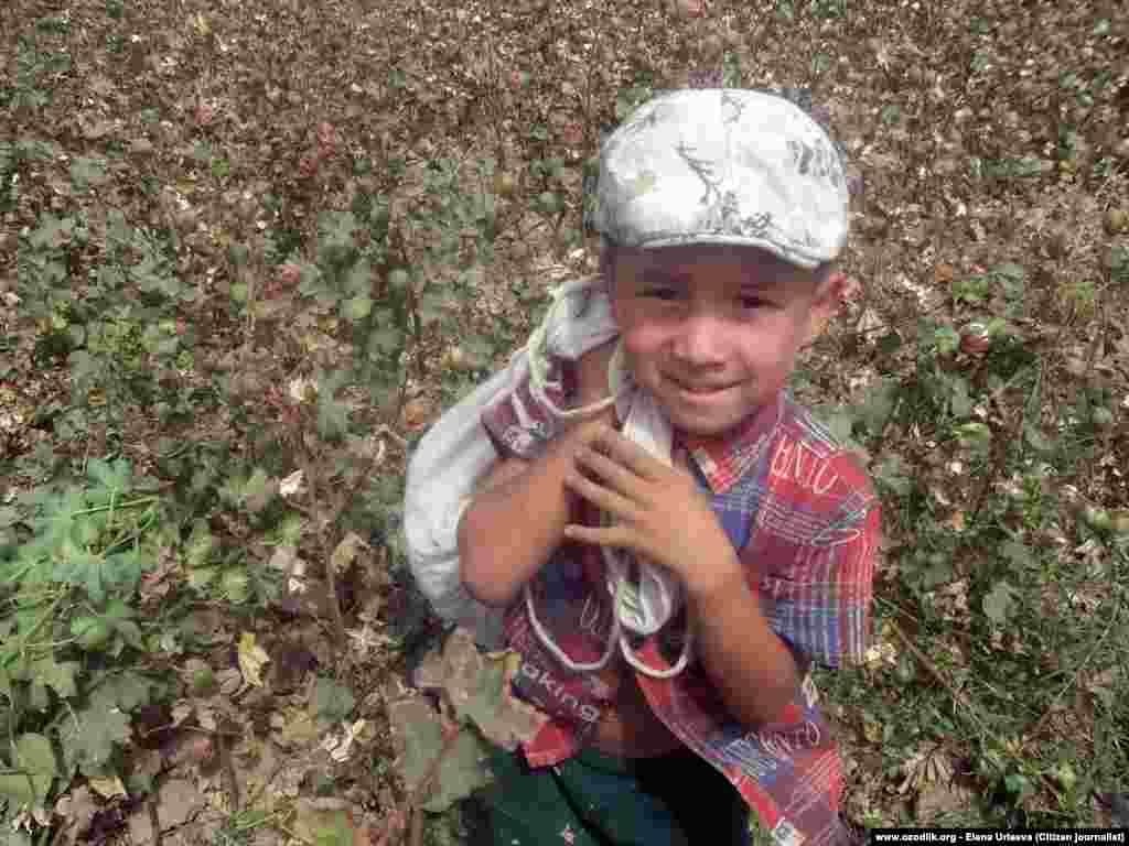 A young boy collects cotton in the Tashkent region. Underage labor is officially banned, but continues nonetheless.
