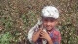 <p>Ташкент облысында мақта алқабында жұмыс істеп жүрген бала. Балаларды жұмысқа жегуге ресми түрде тыйым салынғанымен, іс жүзінде Өзбекстанда бала еңбегін пайдалану тиылған емес.</p>