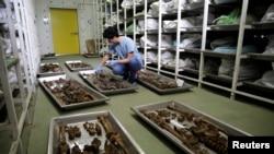 U Identifikacionom centru ICMP-a u Tuzli provodi se identifikacija pronađenih posmrtnih ostataka