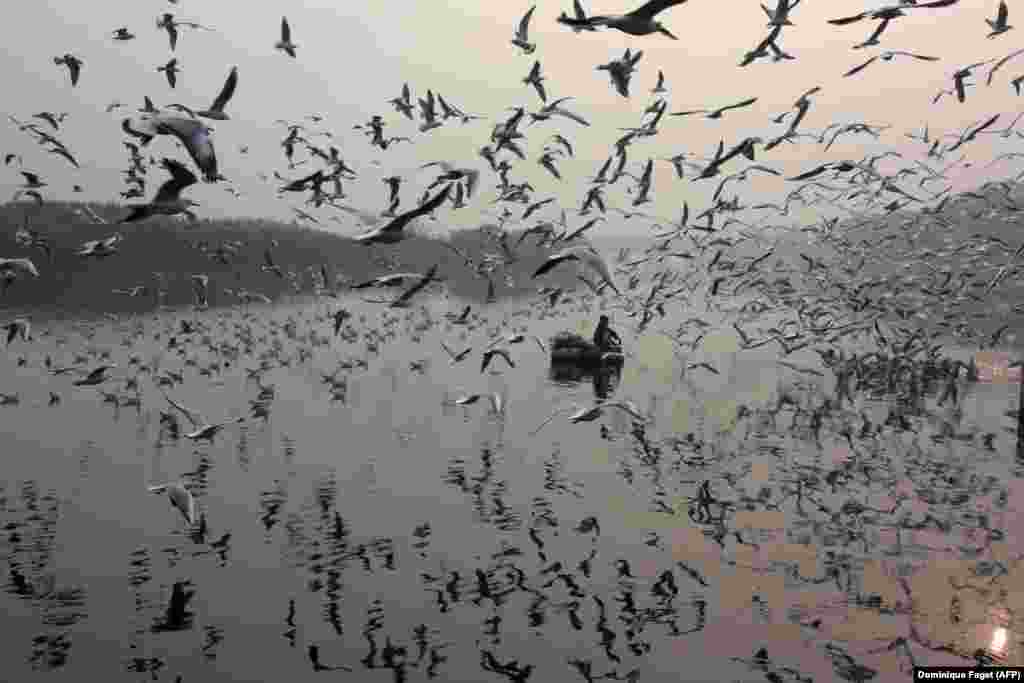An Indian man feeds seagulls on the Yamuna River in New Delhi. (AFP/Dominique Faget)