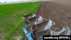 Toshkent viloyat, Oqqo'rg'on tumanida fermerlarning o'nlab gektar bug'doyzori buzib tashlandi.