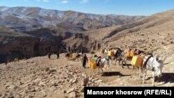 انتقال آب آشامیدنی توسط حیوانات در روستاهای غور