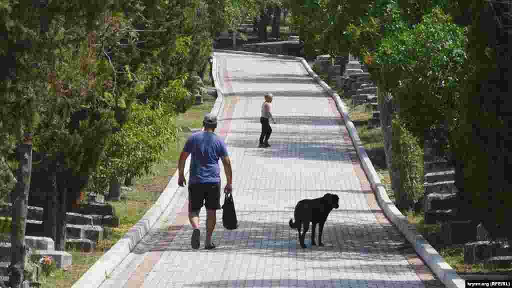 Відвідувачів кладовища супроводжують собака і кішка, сподіваючись поласувати чимось їстівним