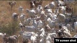Bosnia and Herzegovina - Sarajevo, TV Liberty Show No.833 16Jul2012