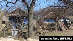 Poza-simbol: Satul Cărpineni