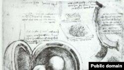 Страница рукописи Леонардо да Винчи «Исследование эмбриона». Рукописи Леонардо сохранили не только отпечатки его пальцев, но и частички пищи, поскольку художник любил перекусить за работой.