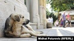 Бродячая собака. Иллюстративное фото.
