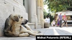 Pas na ulici, Sarajevo, avgust 2012.