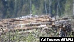 Под шумок переговоров Химкинский лес потихоньку уничтожается