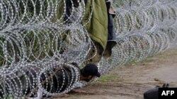 Pamje e një migranti duke u përpjekur ta kaloj barrierën me tela gjemborë në kufirin e Hungarisë nga Serbia