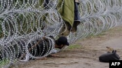 Біженець повзе під металевим парканом на угорсько-сербському кордоні. 26 серпня 2015 року