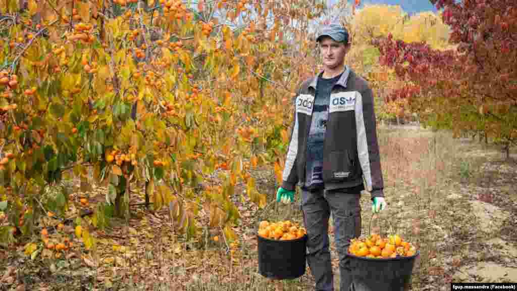 На землях «Масандри» росте не тільки виноград, але й фруктові дерева. Фото: 2019 рік