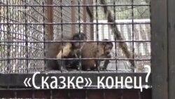 «Проще со львами и тиграми, чем с «гоблинами» во власти» – Олег Зубков о закрытии зоопарка «Сказка» (видео)