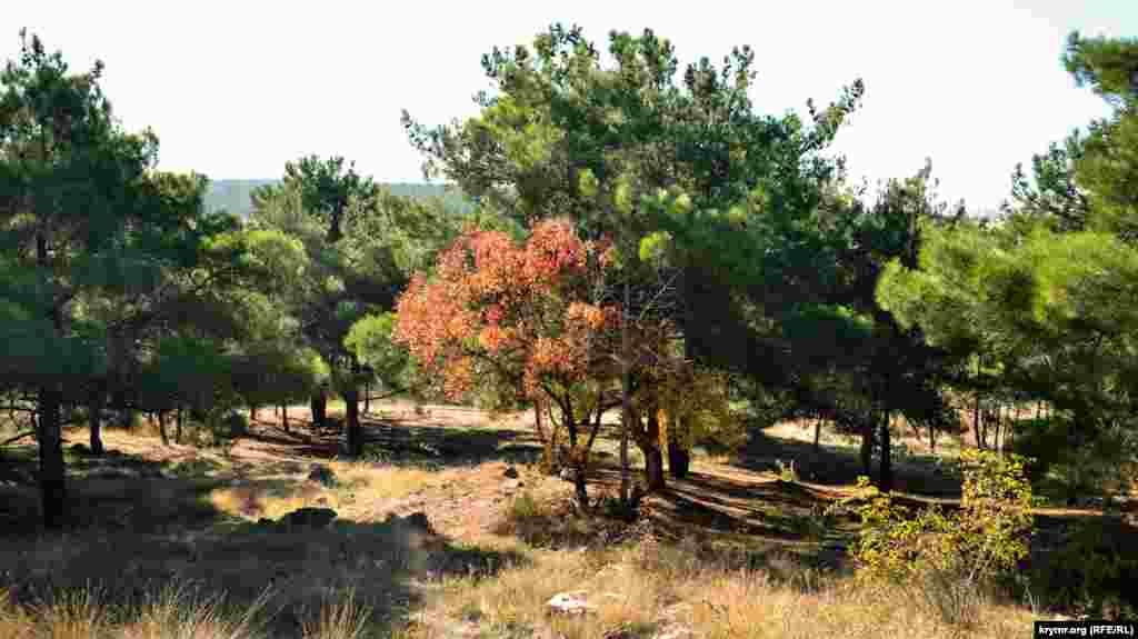 Orman çetinde