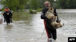 Польські рятувальники допомагають псу під час повені, 2010 рік