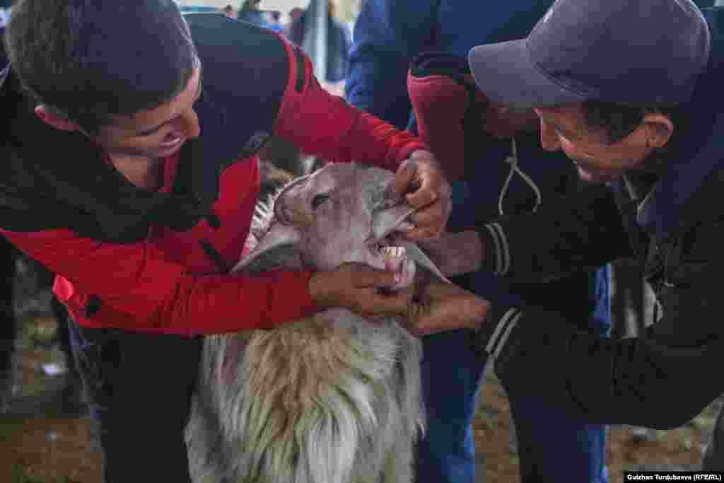 Определить возраст и здорово ли животное можно по зубам.