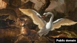 Абрагам Гондыюс, «Лебедзь, разьюшаны сабакамі». Фота: Glasgow Museums
