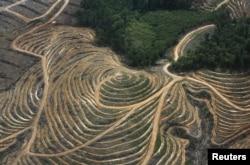 Джунгли, уничтожаемые под масличную плантацию. Индонезийская часть острова Борнео