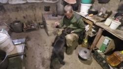 Пес Декс у кухні-землянці на передовій під Попасною