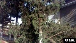 В результате урагана на юге Азербайджана с корнями сорваны десятки деревьев, 3 января 2010 года