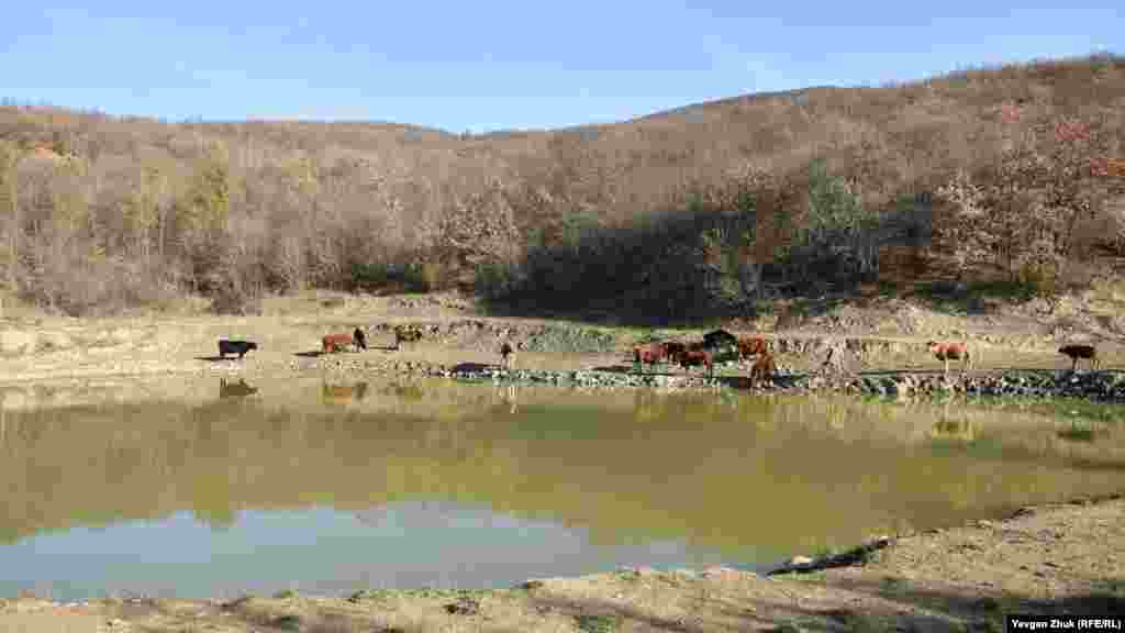 Пруд-копань у леса на восточной окраине села