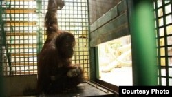 Нона и ее детеныш Оле. Фото зоопарка Калининграда