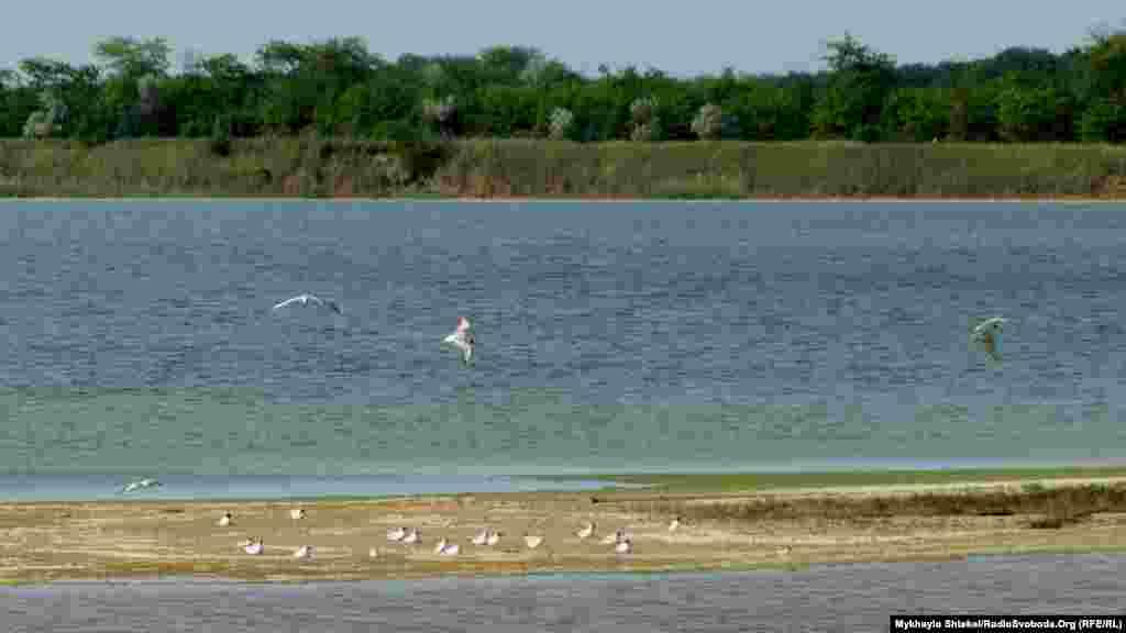 На території національного природного парку «Тузлівські лимани», що поблизу громади, мешкає 257 видів птахів. Територія парку перевищує 27 тисяч гектарів і охоплює 13 морських лиманів і 200 метрів акваторії моря.