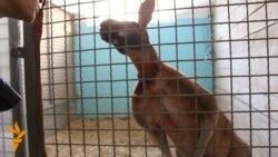 Тварини за лаштунками Київського цирку