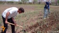ATP-ն 3.5 միլիոն ծառ է տնկել Հայաստանում