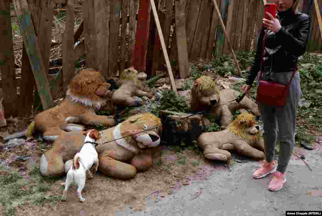 A dog facing up to a pack of lions at the entrance to the yard.
