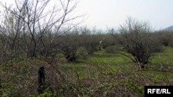 Защитить сад, огород или плантацию от мраморного клопа можно, применяя несколько раз препараты химической группы активности