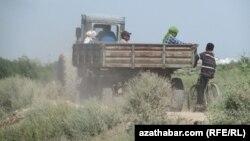 Adamlar oba hojalyk işlerine alnyp barylýar, Türkmenistan