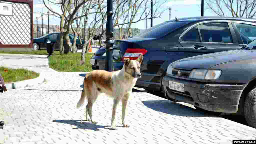 Местная собака возле кафе