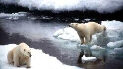 Добро пожаловать на курорты Арктики