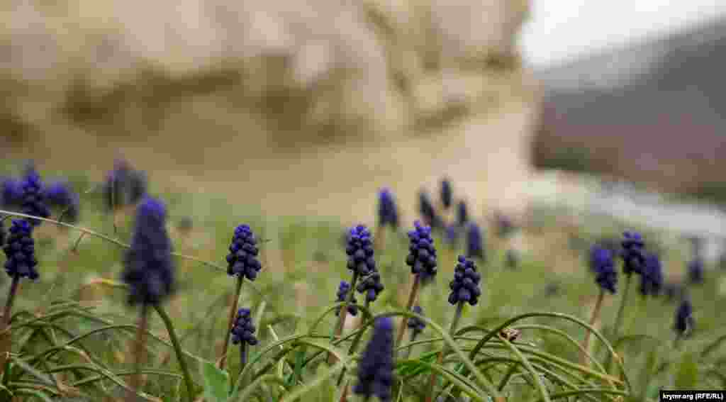 Поляна с гадючим луком в Крымских горах