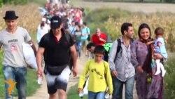 Arritja e migrantëve në Kroaci