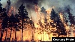 Томская область. Горит лес.