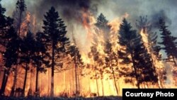 A fire rages in Siberia's Tomsk region.
