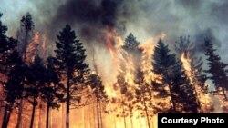 Лесной пожар в Томской области