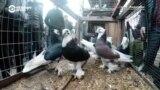 Азия 360°: голуби Андижана