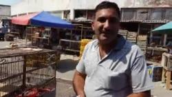 Quş bazarı: Satıcı göyərçinlərin fərqini izah edir